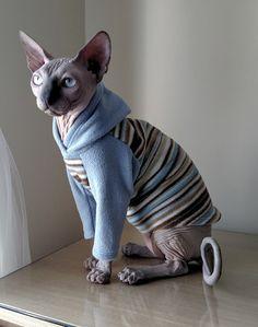 Katze-Kleidung Größe MEDIUM / Katze Pyjamas / von ABCSphynx auf Etsy