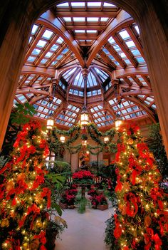 Christmas at Biltmore House in Asheville - Winter Garden during candlelight tour