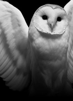 """""""The wings, all spread out and that?"""" The boy mused. """"They're kind of like an angel's.""""  Funny kind of angel. If that is what she was. """"In some cultures, people think they become owls after they die. That would make them ghosts.""""  (A Funeral for an Owl, www.jane-davis.co.uk)"""