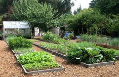 Biodynamisch tuinieren volgens de stand van de maan - biodynamische tuinkalender