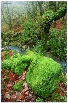 ✯ Moss Covered - Andalucia, Spain