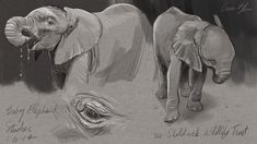 couple of baby elephant sketches. | The Art of Aaron Blaise