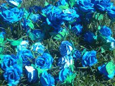 Blue Rose. #blue #rose #flower