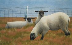Three Sheep, 1954 by Alex Colville on Curiator, the world's biggest collaborative art collection. Canadian Painters, Canadian Artists, Arte Naturalista, Alex Colville, Digital Museum, Ancient Egyptian Art, Collaborative Art, Art Programs, Animal Paintings