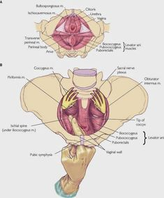 Pelvic Floor Spasm: The missing link in chronic pelvic pain