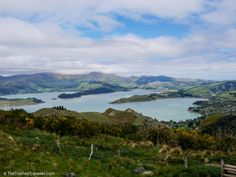 The view from the Port Hills in Christchurch overlooking Lyttleton Harbour - 43 Photos to Convince You to Visit New Zealand's South Island - The Trusted Traveller