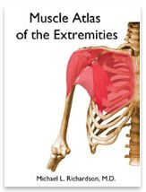 Muscle Atlas of the Extremities origin insertion action flash cards