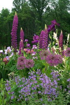 Photo: purple spires