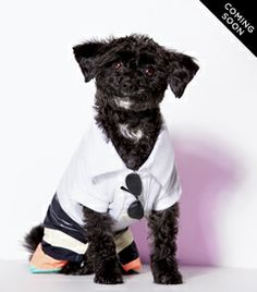 The American Beagle Outfitters Look Book Is a Dog Lover's Dream American Beagle, Animal Projects, Woodland Creatures, Mens Outfitters, Pet Clothes, I Love Dogs, New Outfits, Best Dogs, Cuddling