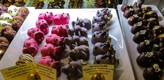 Photos of a Chocolate Tour in Boston to Make You Drool. Pictured: Super cute hippo and pig chocolates!