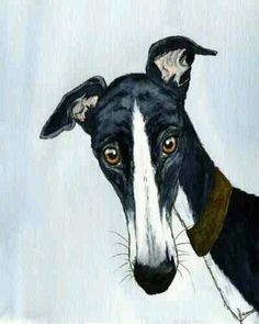 Large Painting Greyhound Lurcher Whippet Dog Portrait 5384 Dianne Heap Art Print for sale Art And Illustration, Greyhound Kunst, Lurcher, Grey Hound Dog, Arte Pop, Animal Decor, Dog Paintings, Fauna, Dog Portraits