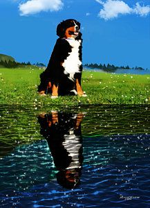 Bernese Mountain Dogs Photograph - King Of The Hill 1 by EricaMaxine  Price