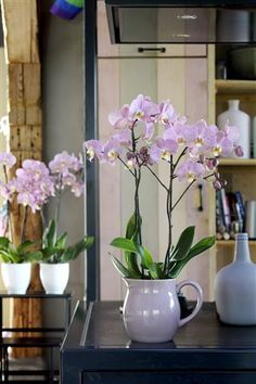 A simple way to create more style into your home ©Anthura #phalaenopsis #Padova #pink
