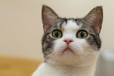 cat - http://www.1pic4u.com/blog/2014/10/06/cat-66/