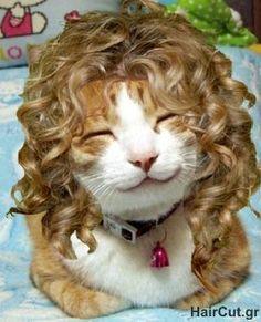 hair-cat!