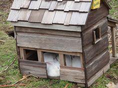 Great rabbit house!