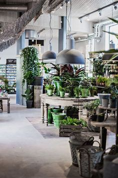 flower shop                                                                                                                                                                                 More                                                                                                                                                                                 More