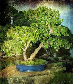 Bonsai in texture | Flickr: Intercambio de fotos