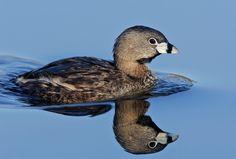 HDQ Images bird image - bird category