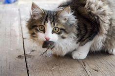 Gatos são espiritualistas. Não armazenam alimentos em detrimento de outros gatos que estão passando fome, nem colecionam camas macias ou bolinhas de papel. Usam apenas aquilo de que precisam e abandonam qualquer coisa que lhes é dada em duplicidade. Fazem isso para servir de exemplo aos homens.