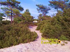 Playa Troia. Portugal. Floristería Correflor. 91 695 62 71
