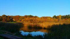 Köcsi lake