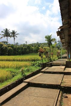 rice fields at GitGit Waterfall  Bali, Indonesia