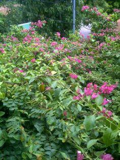 Flores de Santa Rita