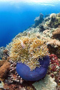 Pemuteran reef, North Bali