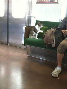 電車内 猫 - Google 検索