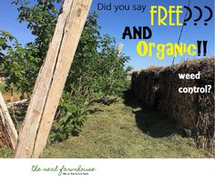 Organic and free weed control for bigger areas.