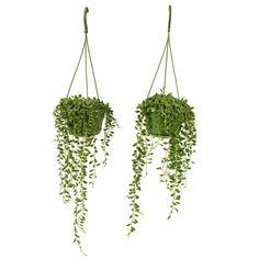 Ogreen Erwtenplant 2 st. kopen? Bestel bij fonQ