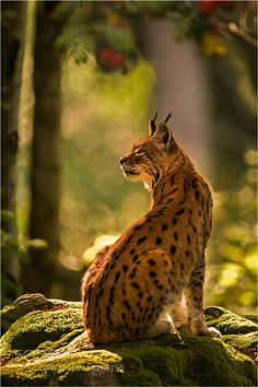 Majestic forest by Photospot-be via http://ift.tt/1tkAgRA