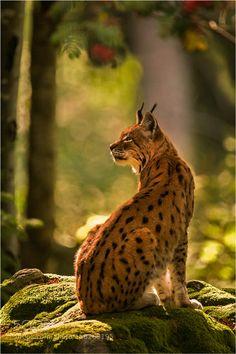 Majestic forest by Photospot-be #animals #animal #pet #pets #animales #animallovers #photooftheday #amazing #picoftheday
