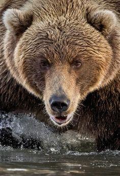 Grizzly by Kyriakos Kaziras