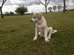 Doree in the park
