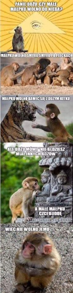 Wtf Funny, Funny Memes, Polish Memes, Animal Memes, Best Memes, Funny Photos, Animals And Pets, Haha, Harry Potter