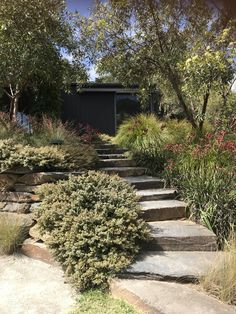 Appear this essential graphics in order to look into the here and now guidance on Landscaping Hedges Australian Garden Design, Australian Native Garden, Mediterranean Garden Design, Outdoor Steps, Coastal Gardens, Sloped Garden, Garden Landscape Design, Front Yard Landscaping, Backyard Patio