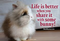 We will always share our life with bunnies! http://best4bunny.com/