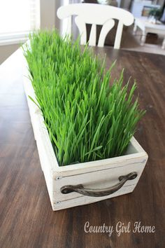 Grow wheat grass simply in 10 days..a fresh fun thing to add to Easter decor. Full DIY. Love it in the long wooden tray. I think I am going to do this every year and itnever happens.....maybe this year