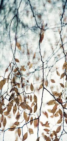Autumn #inspiration #photo