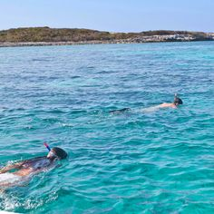 What's the most amazing thing you've seen snorkeling?