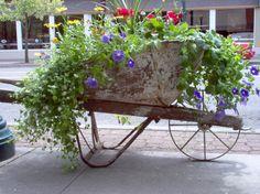 images wheel barrel flower - Google Search
