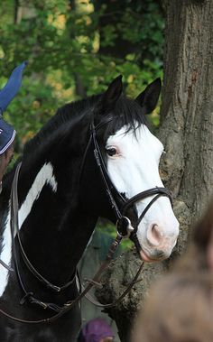 Horse - Black and White - Head shot    would love to have a horse like this!  Have always wanted a black and white one