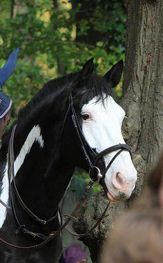 Horse - Black and White - Head shot