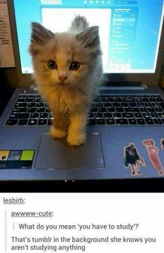 That cats adorable!