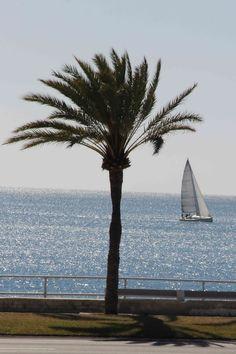 Palma al 1 de marzo de 2016