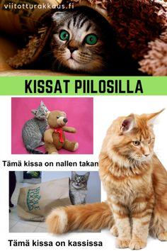 Riimiparit: mikä sana ei kuulu joukkoon? - ViitottuRakkaus.fi Takana, Teddy Bear, Toys, Animals, Animales, Animaux, Teddybear, Animal, Games