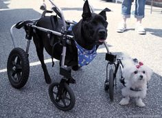 dog wheelchair, wheelchair dog, dog wheels, dog wheelchairs | Hand Built Quality by Ruff Rollin | Chamberlin and Sookie