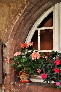 Window -- géranium                                                                                                                                                      Plus